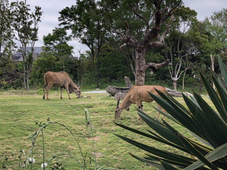ဂျပန်လူမျိုးတိုင်း နှစ်သက်ကြတဲ့တိရစ္ဆာန်ရုံ